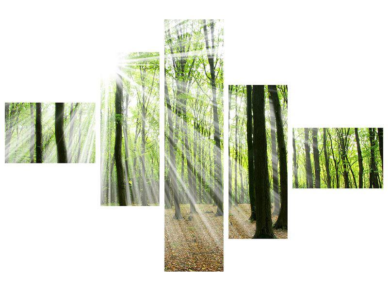 Hartschaumbild 5-teilig modern Magisches Licht in den Bäumen