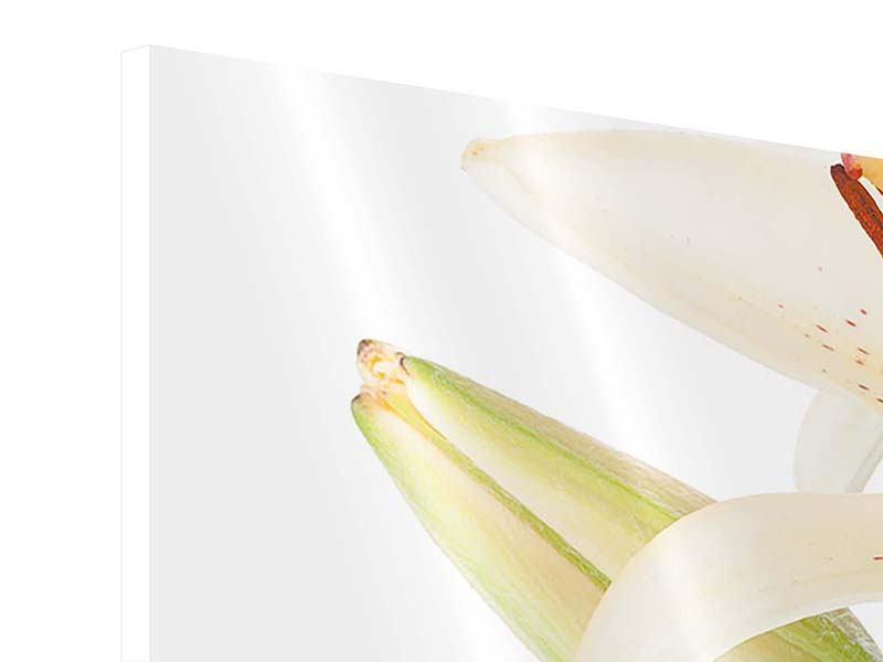 Hartschaumbild 5-teilig modern Weisser Lilienstrauch