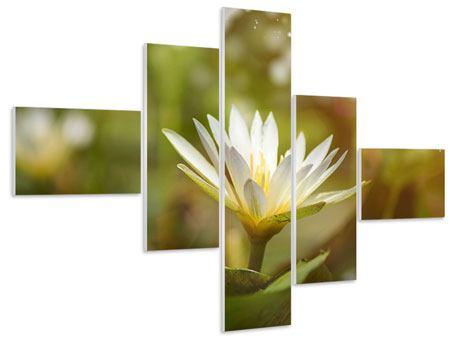 Hartschaumbild 5-teilig modern Lilien-Lichtspiel