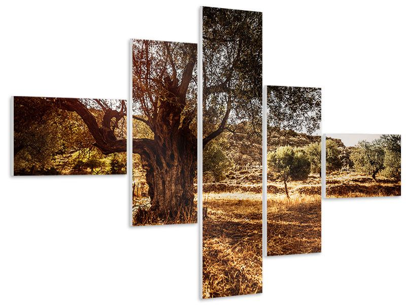 Hartschaumbild 5-teilig modern Olivenhain