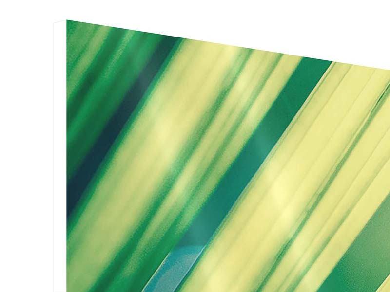 Hartschaumbild 5-teilig modern Beleuchtetes Palmblatt
