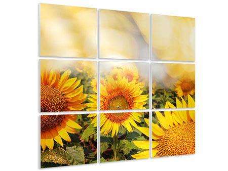 Hartschaumbild 9-teilig Das Licht der Sonnenblumen