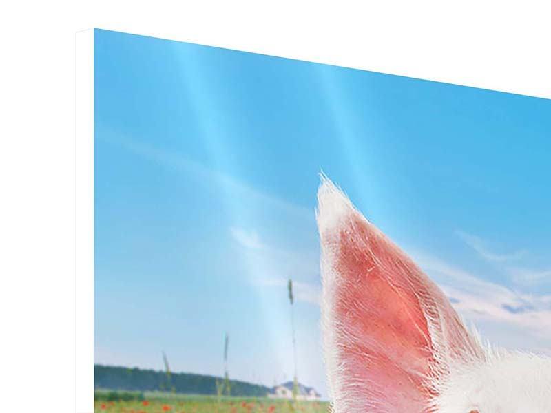 Hartschaumbild 9-teilig Schweinchen im Glück