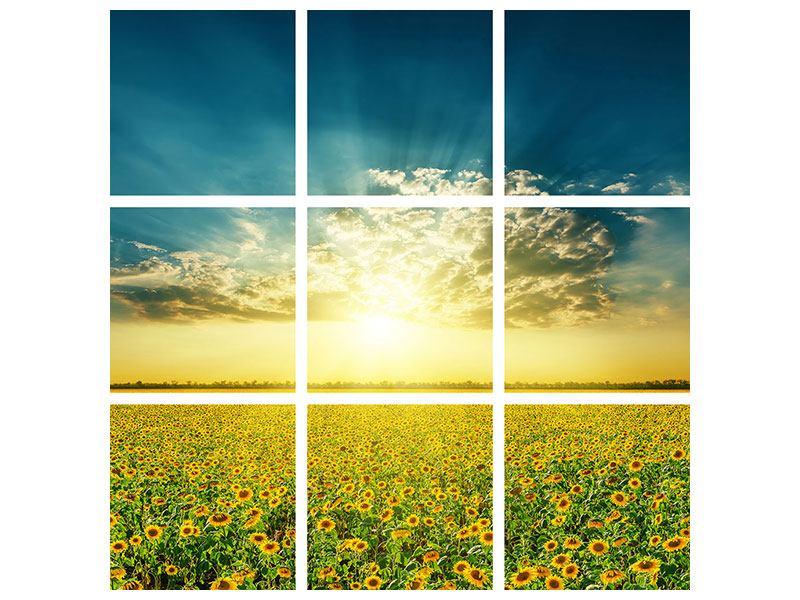 Hartschaumbild 9-teilig Sonnenblumen in der Abendsonne