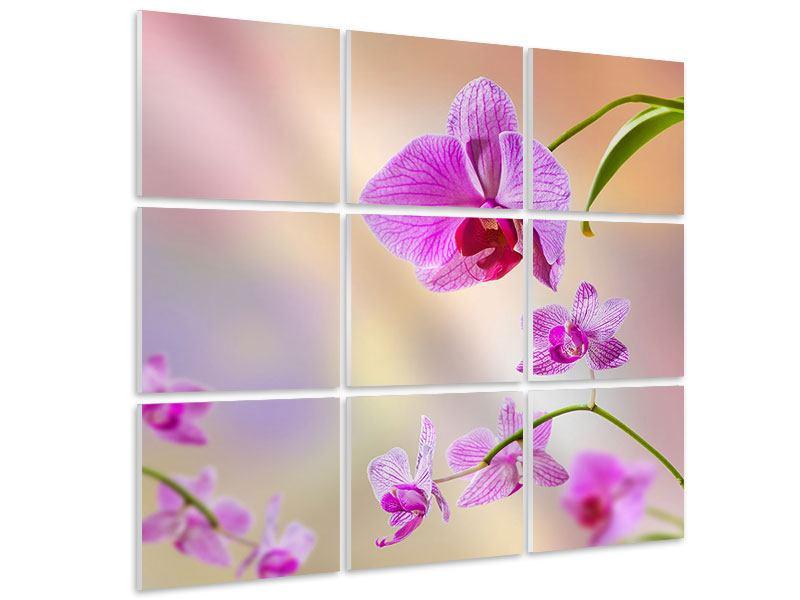 Hartschaumbild 9-teilig Romantische Orchideen