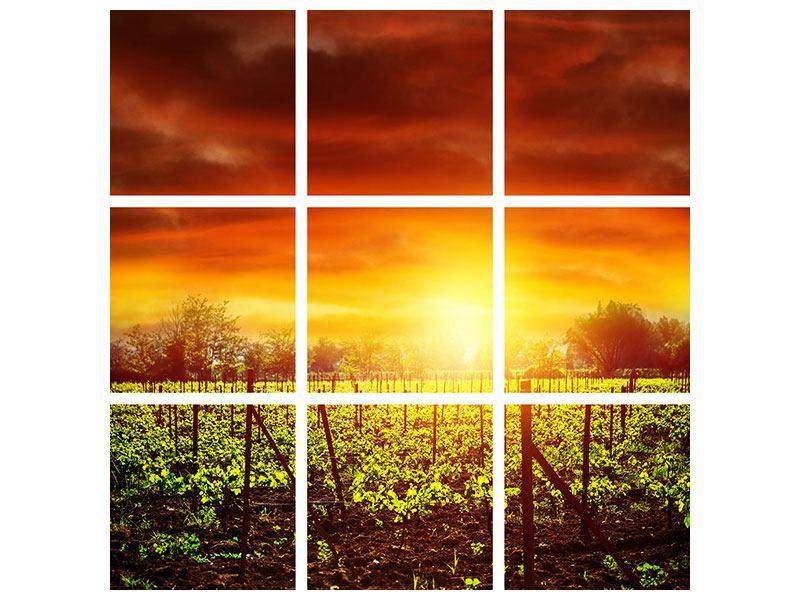 Hartschaumbild 9-teilig Der Weinberg bei Sonnenuntergang