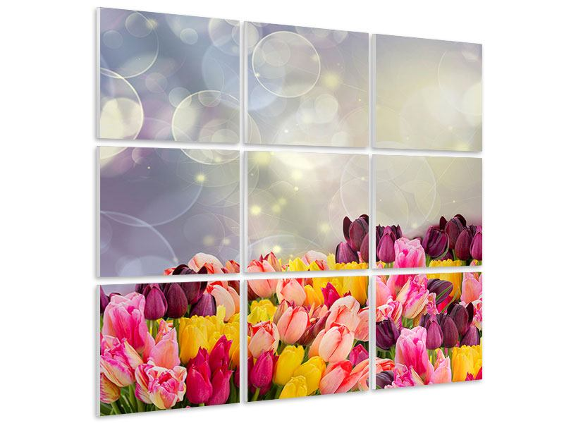 Hartschaumbild 9-teilig Buntes Tulpenbeet im Lichtspiel