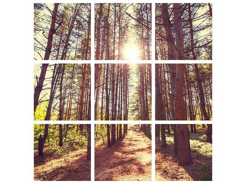 Hartschaumbild 9-teilig Licht am Ende des Waldweges