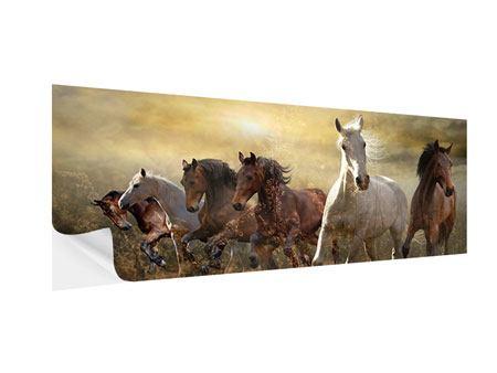 Klebeposter Panorama Wilde Pferde
