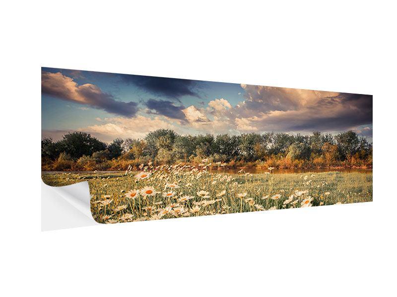 Klebeposter Panorama Die Wiesenmargerite am Fluss