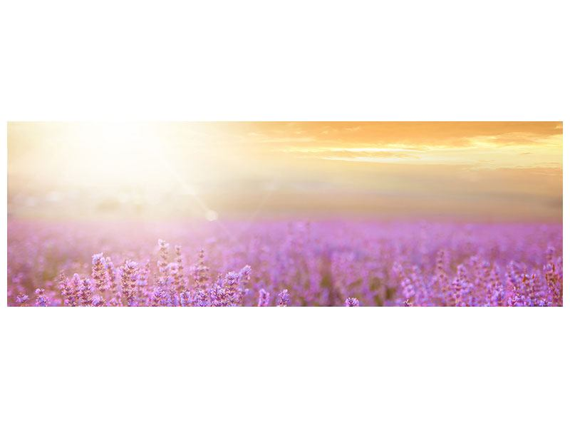 Klebeposter Panorama Sonnenuntergang beim Lavendelfeld