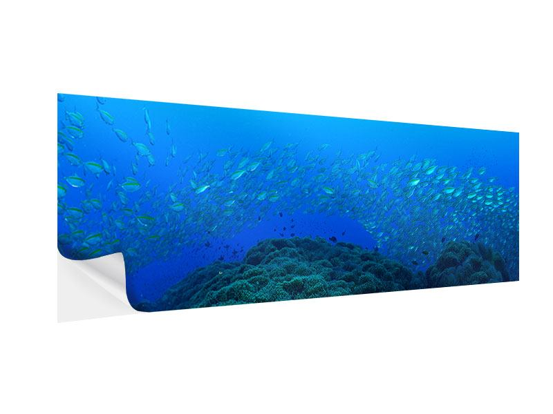 Klebeposter Panorama Fischschwärme