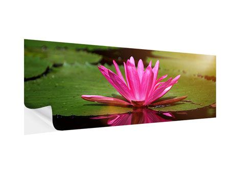 Klebeposter Panorama Lotus im Wasser