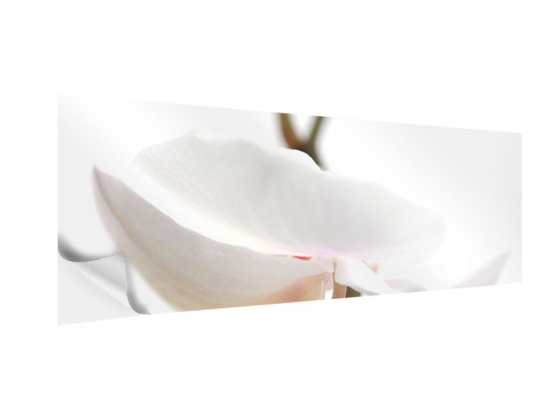 Klebeposter Panorama XXL Orchideenblüte