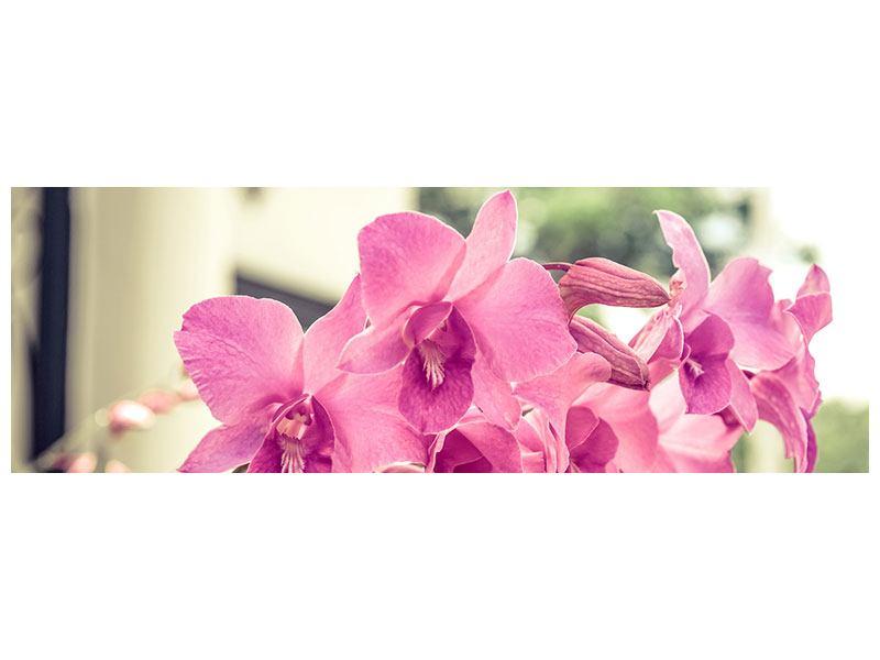 Klebeposter Panorama Ein Fensterplatz für die Orchideen