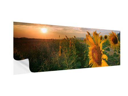 Klebeposter Panorama Sonnenblumen im Lichtspiel