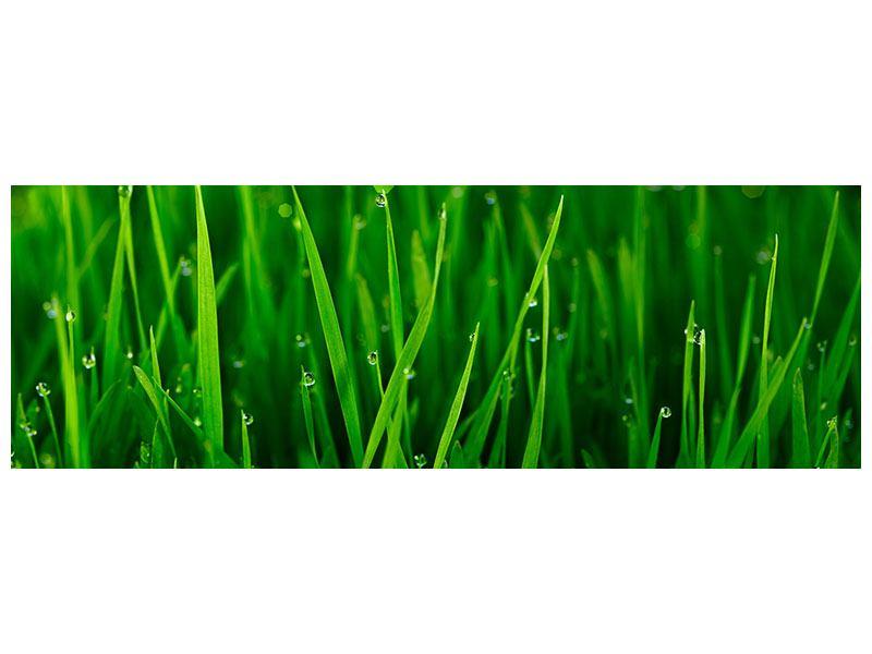 Klebeposter Panorama Gras mit Morgentau