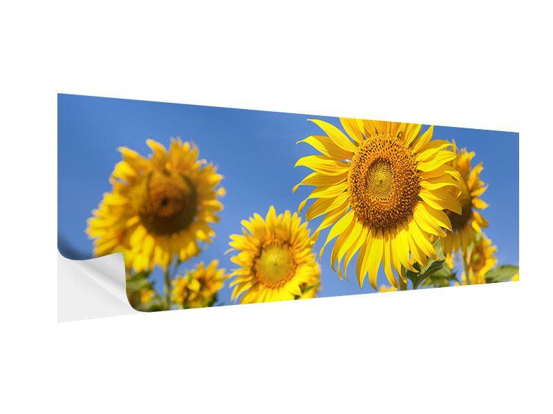 Klebeposter Panorama Himmlische Sonnenblumen