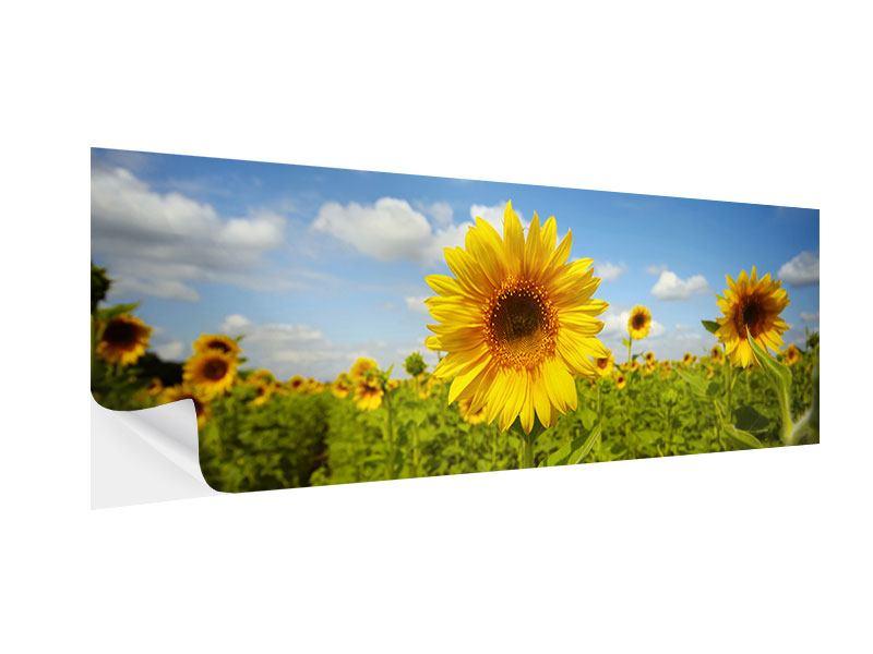 Klebeposter Panorama Sommer-Sonnenblumen
