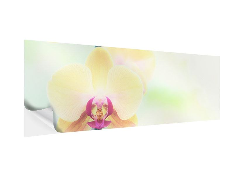 Klebeposter Panorama Lovely Orchidee