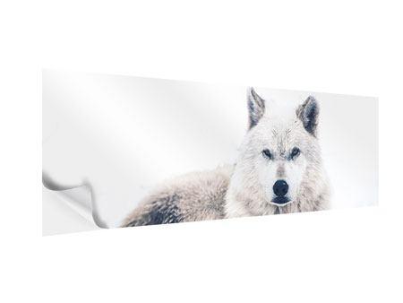 Klebeposter Panorama Der Wolf