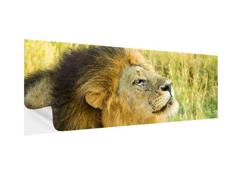Klebeposter Panorama Der König der Tiere