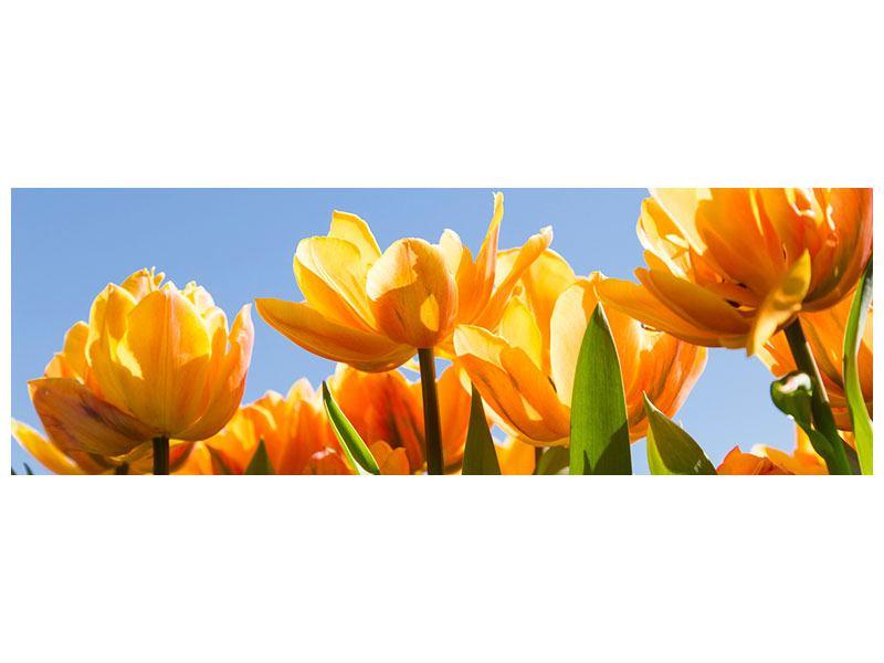 Klebeposter Panorama Märchenhafte Tulpen