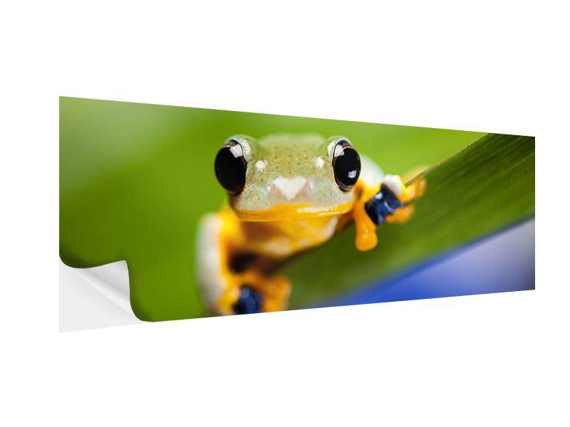 Klebeposter Panorama Frosch XXL