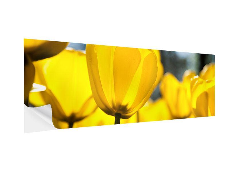 Klebeposter Panorama Gelbe Tulpen in XXL