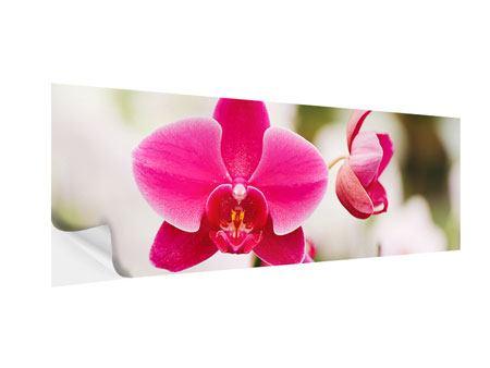 Klebeposter Panorama Perspektivische Orchideen