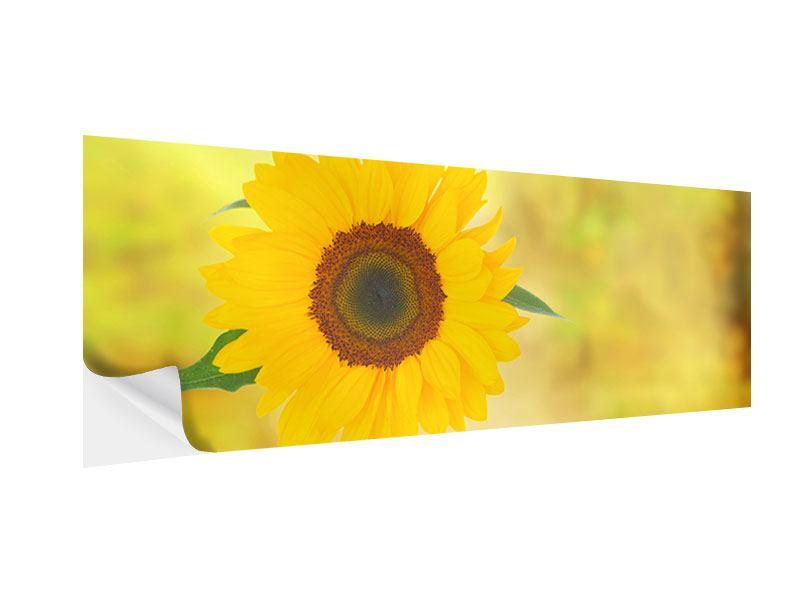 Klebeposter Panorama Die Sonnenblume