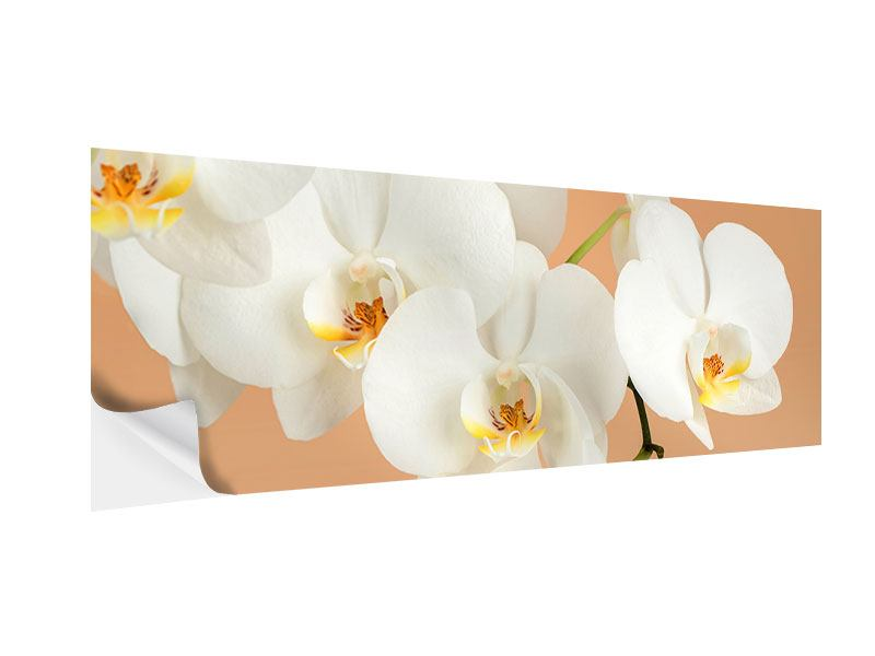 Klebeposter Panorama Weisse Orchideenblüten