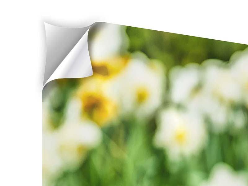 Klebeposter Panorama Ein Garten mit Tulpen