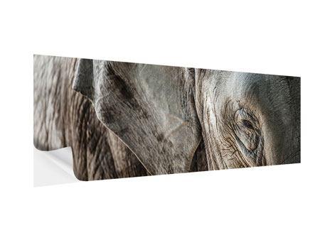 Klebeposter Panorama Close Up Elefant