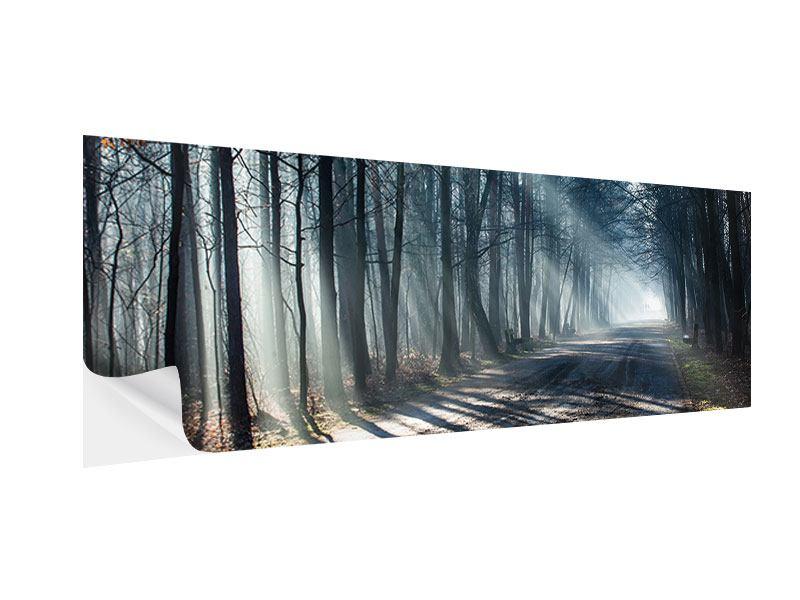 Klebeposter Panorama Wald im Lichtstrahl