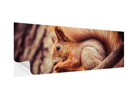 Klebeposter Panorama Eichhörnchen