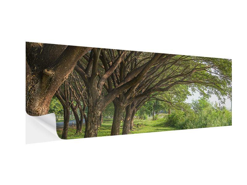 Klebeposter Panorama Alter Baumbestand