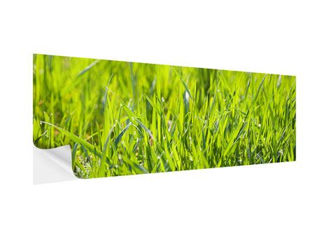Klebeposter Panorama Gras im Morgentau