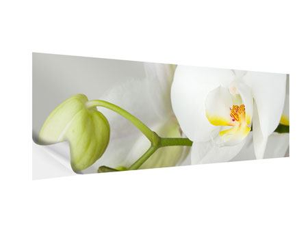 Klebeposter Panorama Riesenorchidee