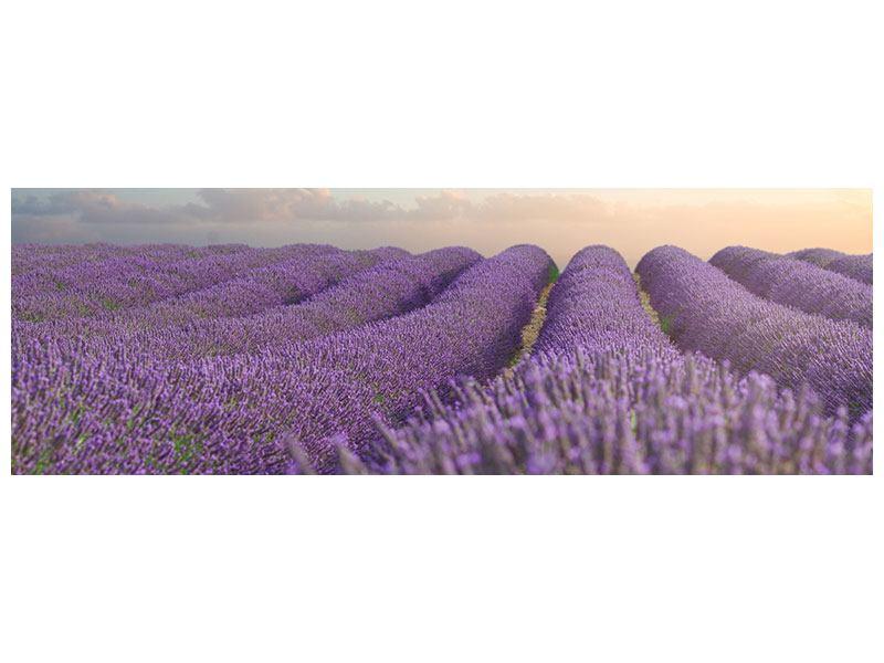 Klebeposter Panorama Das blühende Lavendelfeld