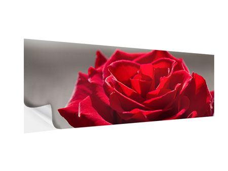 Klebeposter Panorama Rote Rosenblüte