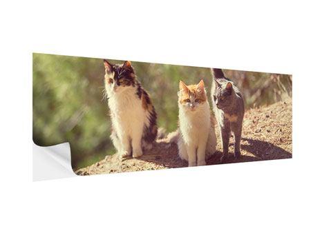 Klebeposter Panorama Katzen im Garten