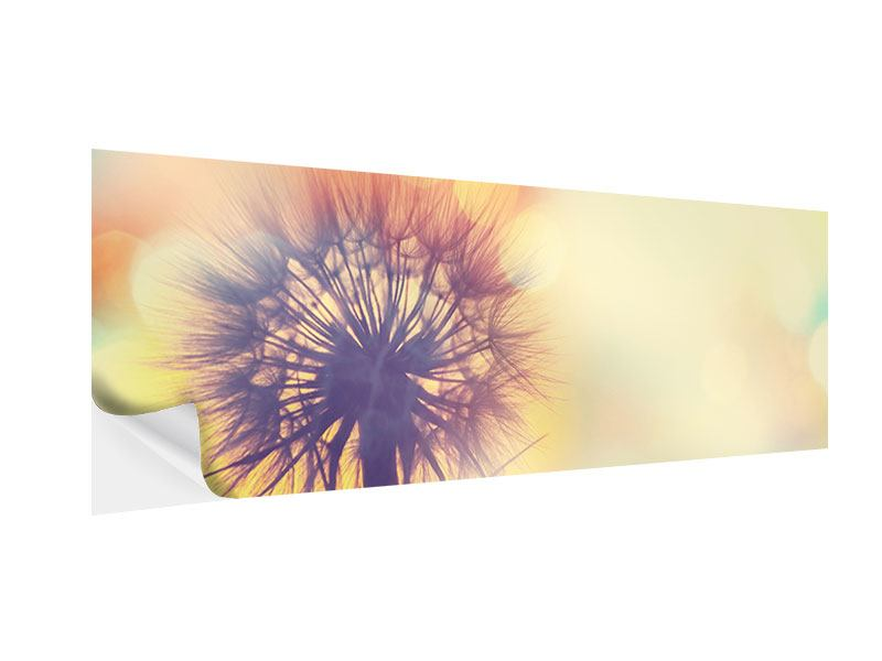 Klebeposter Panorama Die Pusteblume im Licht