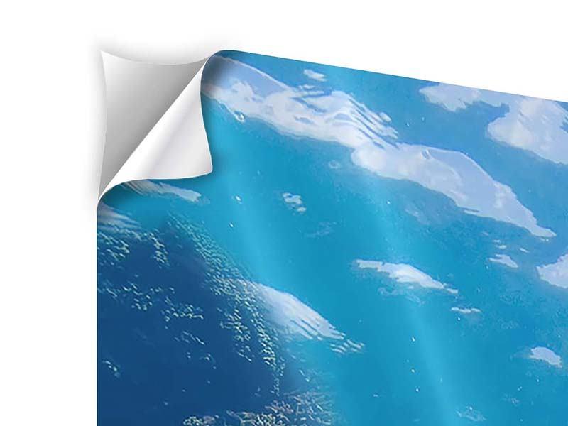 Klebeposter Panorama Die Wasserschildkröte