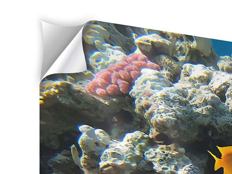 Klebeposter Panorama Das Aquarium