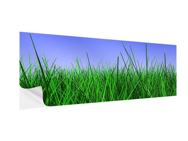 Klebeposter Panorama Im Gras
