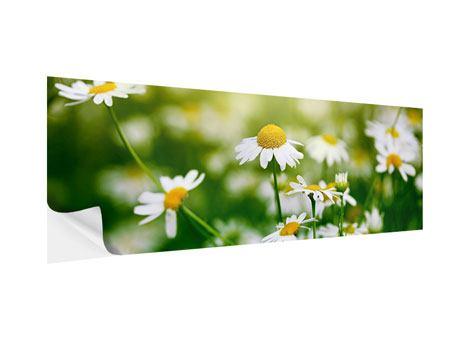 Klebeposter Panorama Die Gänseblümchen