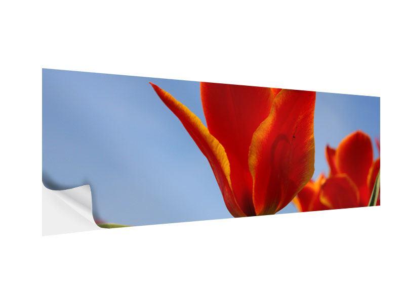 Klebeposter Panorama Rote Tulpen in XXL
