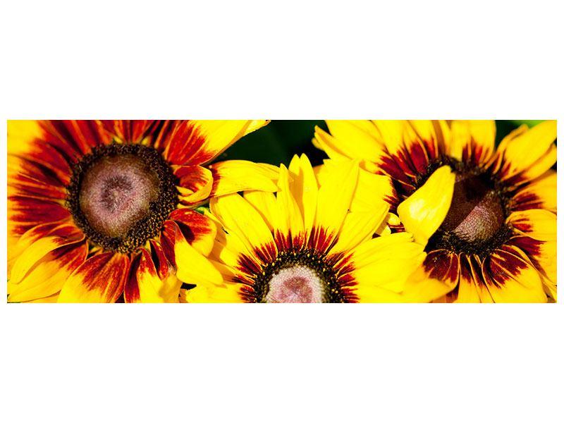 Klebeposter Panorama Reife Sonnenblumen