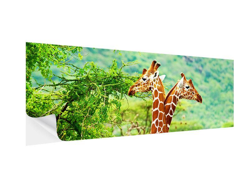 Klebeposter Panorama Giraffenliebe